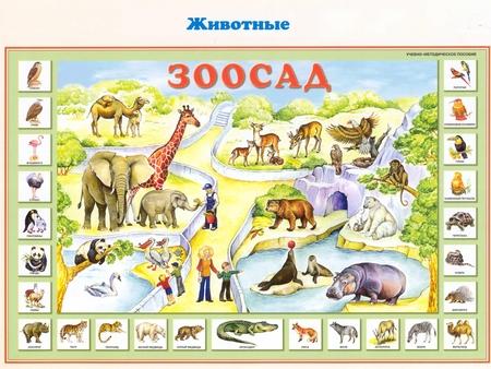 Развитие животных картинки для детей