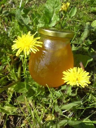 Народные рецепты из цветков одуванчика