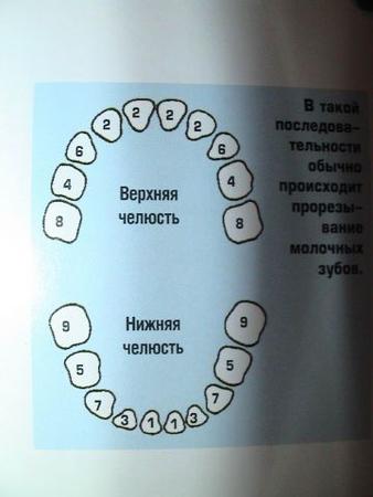 У нас такая же беда вот на картинке я отметила каких зубов у нас не хватает, только мнгя вотнует зуб 2 ему места нет...