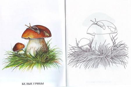 Раскраски. Грибы. - раскраска грибы - запись пользователя ...