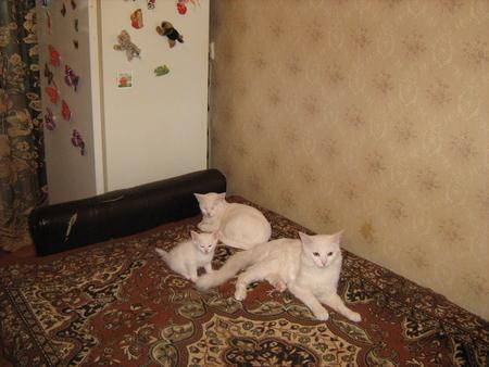 Кошка мама кот сын