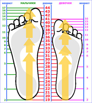 размер члена 14 см Иннополис