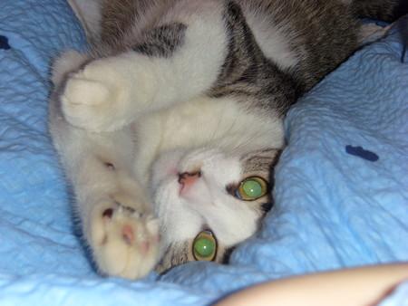 Ru_cats | Entries tagged with пропал кот/кошка