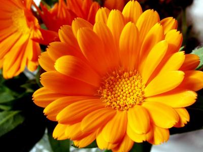 фото оранжевых