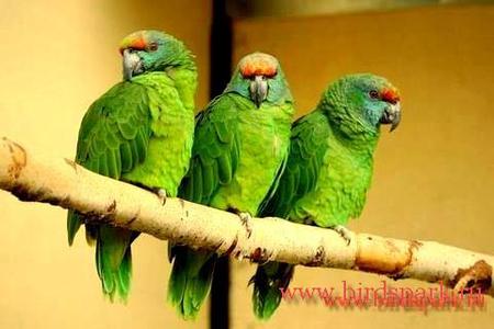 Есть желающие съездить в Калужскую область д.Воробьи в Парк птиц?  Всю информацию о парке можно.