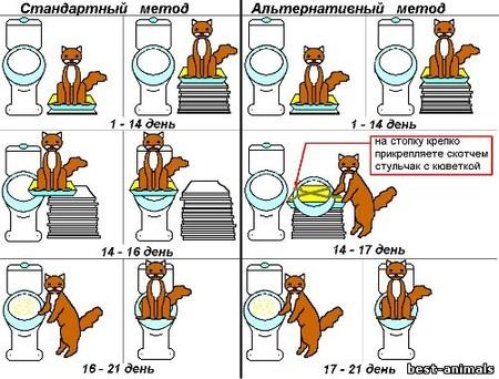 Как приучить котёнка к туалету и