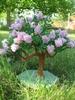 деревья из бисера сирень схемы и описания каштан - Вышивка бисером.