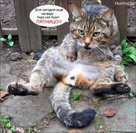 Потомучто мишка очень сексуально озабочен